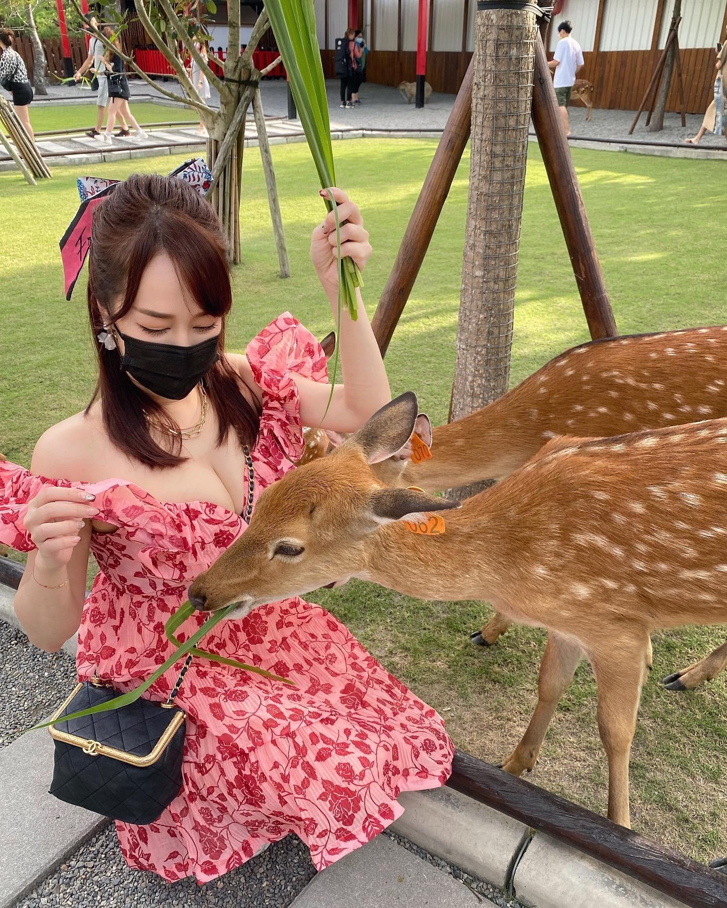 洋裝餵食梅花鹿